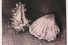2 Different Shells