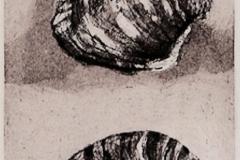2 Shells