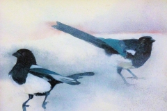 Magpies in the Snow