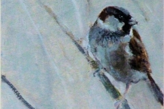 Sparrow in Reedbed